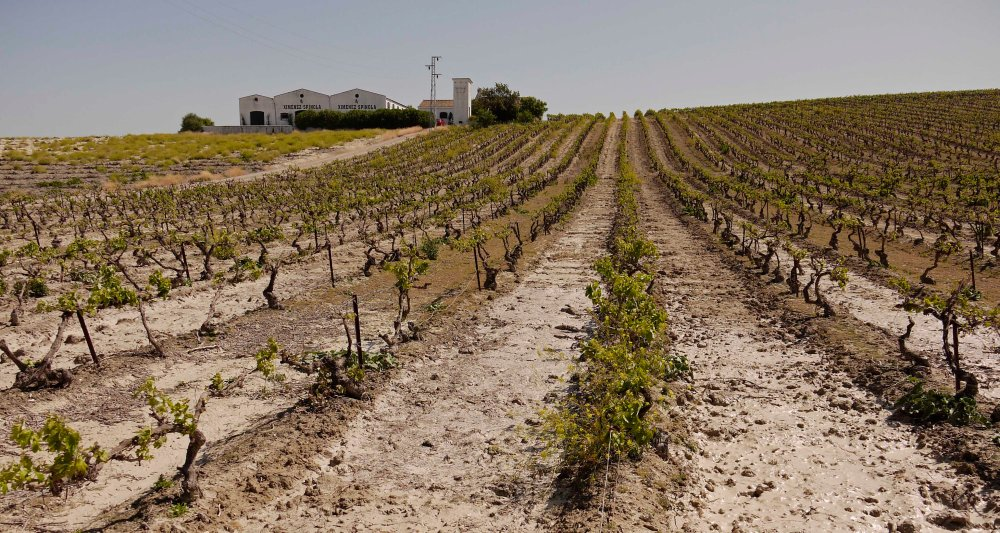 Ximenez Spinola paisaje viña